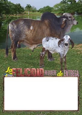 CARNES CUARTO CARTON 6402 2021 02