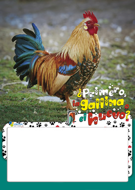 Almanaque Fauna Papel ¼