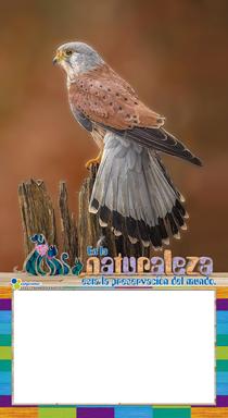 FAUNA DOCEAVO 2021 V3 03
