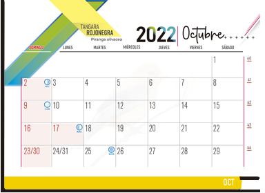 ESK EJECUTIVO 2022 21