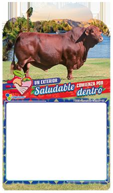 IMANTADO CARNES 05