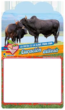 IMANTADO CARNES 06