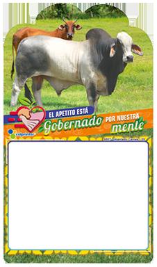 IMANTADO CARNES 09